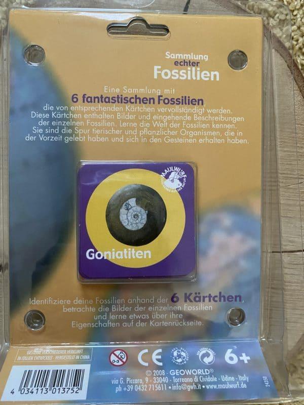 Sammlung echter Fossilien - 6 echte Fossilien mit Begleitkärtchen 2 SanjaNatur