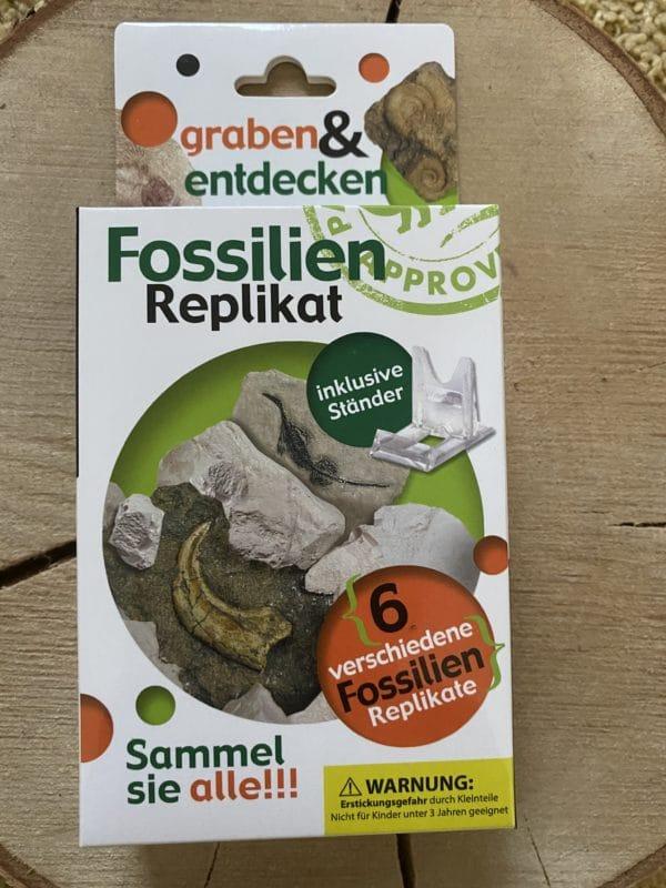 Set: Fossilien Replikat versch. Ausführungen inkl. Ständer mit Entdecker Filzschnüre 2 SanjaNatur